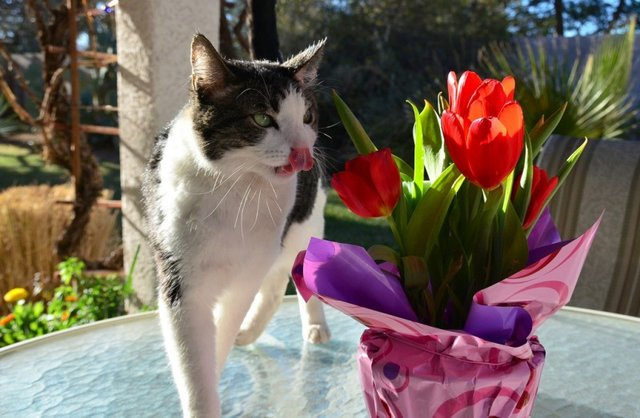 Cats_Sniffing_Flowers_13