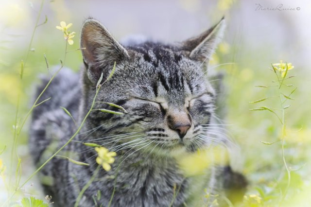 Cats_Sniffing_Flowers_15