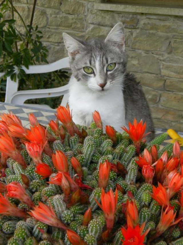 Cats_Sniffing_Flowers_17