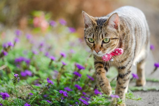 Cats_Sniffing_Flowers_18