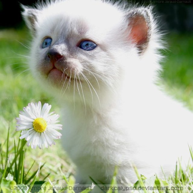 Cats_Sniffing_Flowers_19