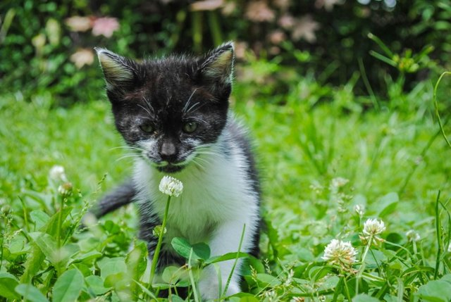 Cats_Sniffing_Flowers_20