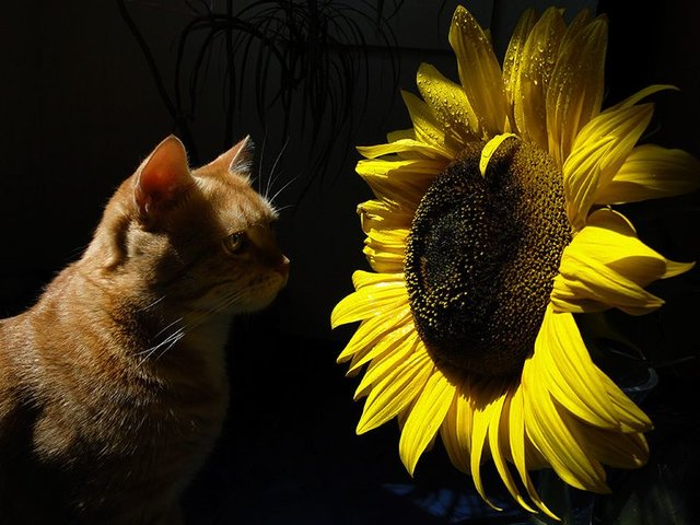 Cats_Sniffing_Flowers_21