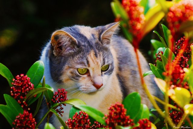 Cats_Sniffing_Flowers_22