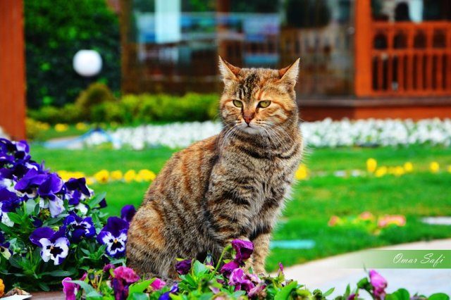 Cats_Sniffing_Flowers_23