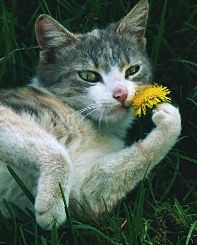 Cats_Sniffing_Flowers_26