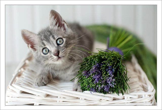 Cats_Sniffing_Flowers_27