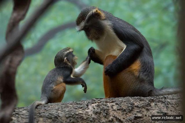 animal-babies_001