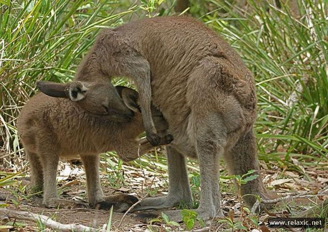 animal-babies_005