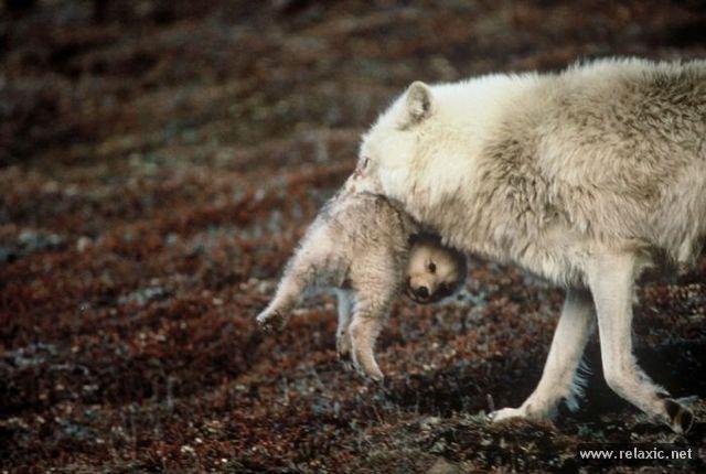 animal-babies_008