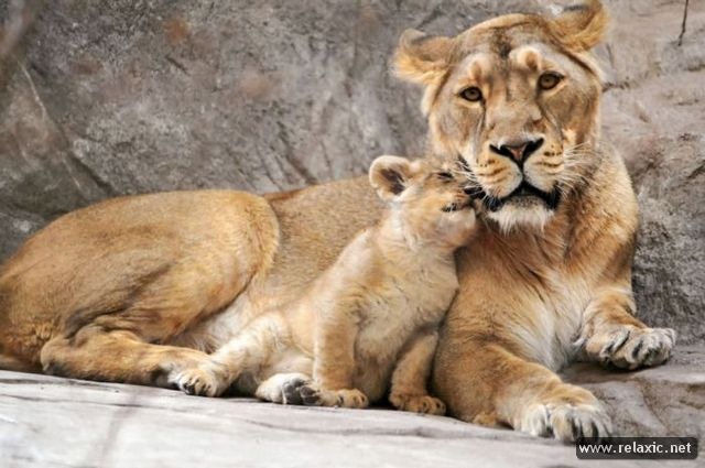 animal-babies_012