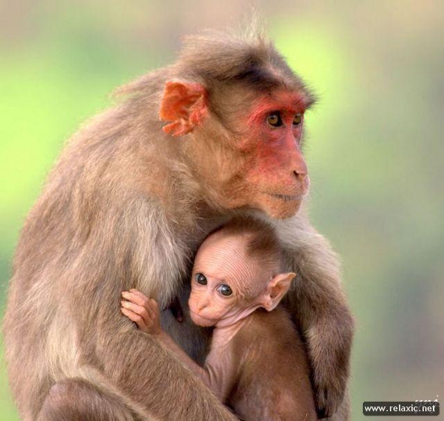 animal-babies_020