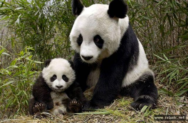 animal-babies_022