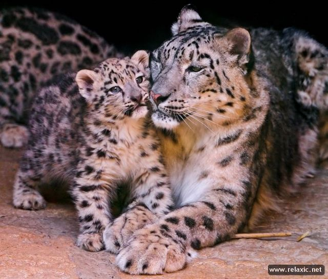 animal-babies_037
