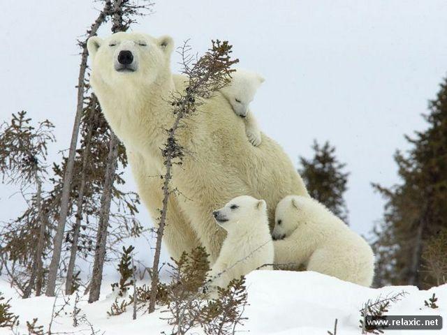 animal-babies_039