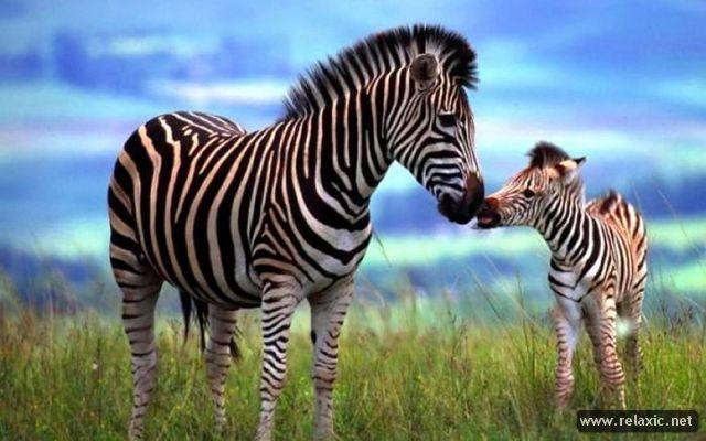 animal-babies_040
