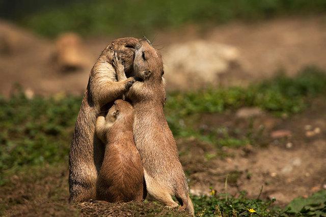 animal_kiss_02