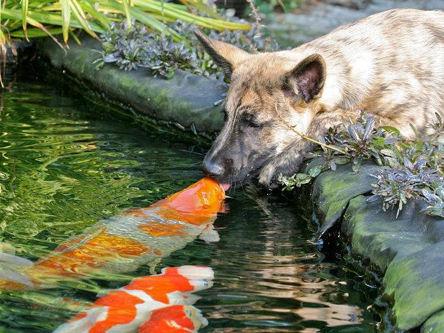 animal_kiss_10