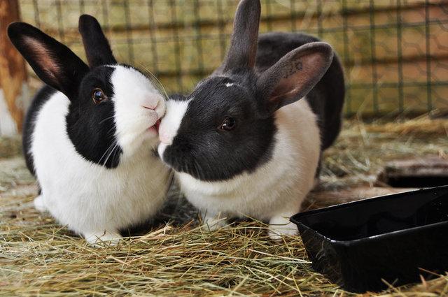 animal_kiss_13