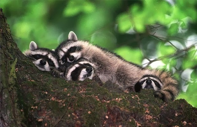 cute_animals_sleeping_pillows_03_1
