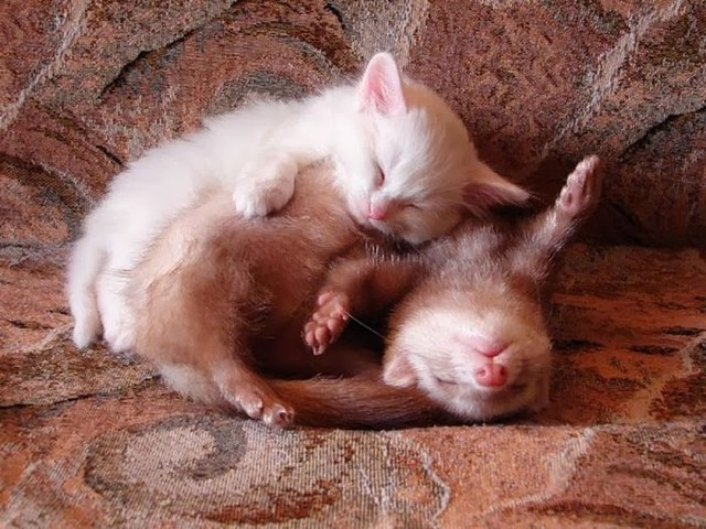 cute_animals_sleeping_pillows_05_1
