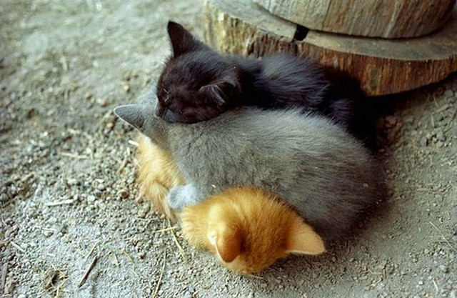 cute_animals_sleeping_pillows_10_1