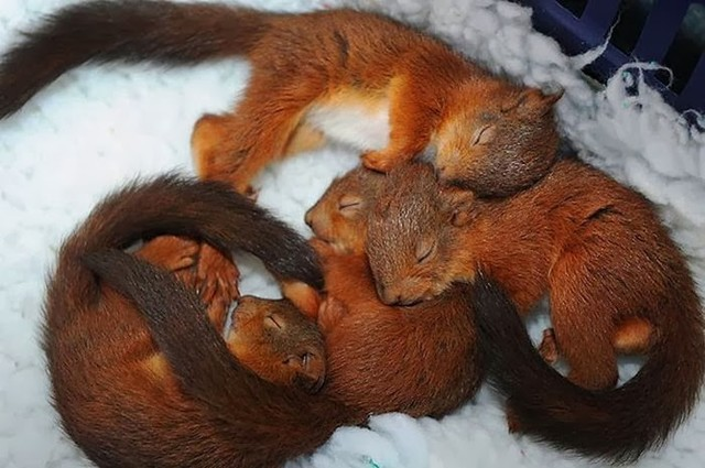 cute_animals_sleeping_pillows_11_1