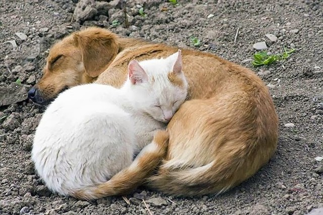 cute_animals_sleeping_pillows_13_1