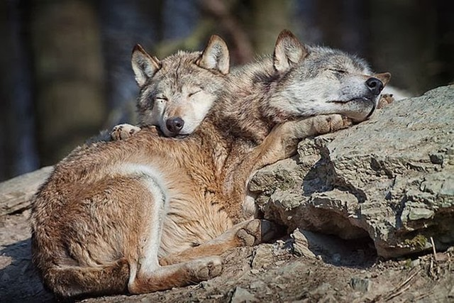 cute_animals_sleeping_pillows_14_1