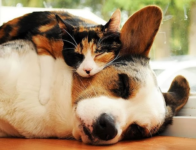 cute_animals_sleeping_pillows_15_1