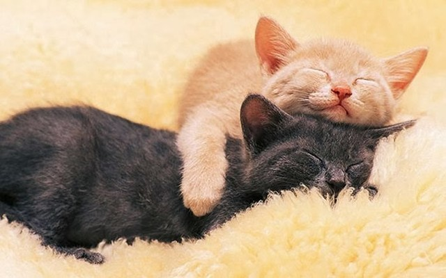 cute_animals_sleeping_pillows_27_1