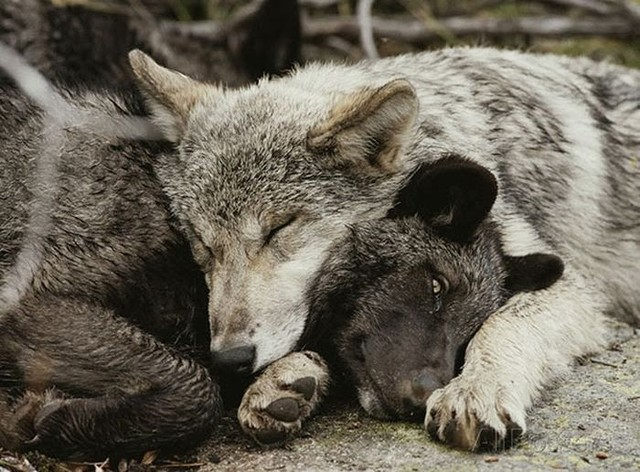 cute_animals_sleeping_pillows_30_1