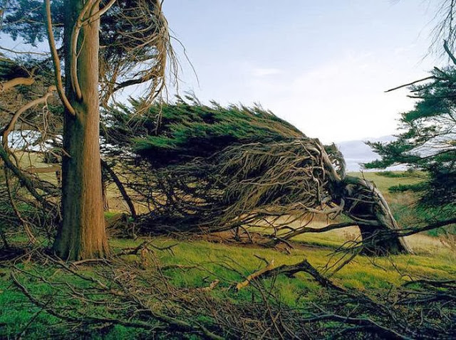 the_twisted_trees_of_slope_point_02_001