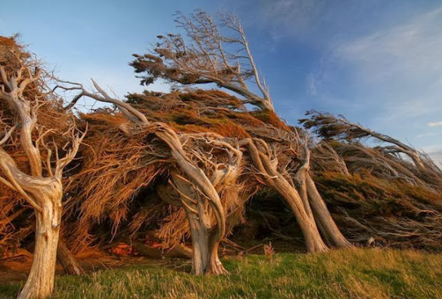 the_twisted_trees_of_slope_point_03_001