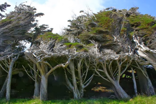 the_twisted_trees_of_slope_point_06_001