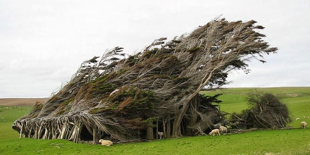 the_twisted_trees_of_slope_point_07_001
