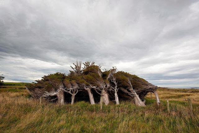 the_twisted_trees_of_slope_point_11_001