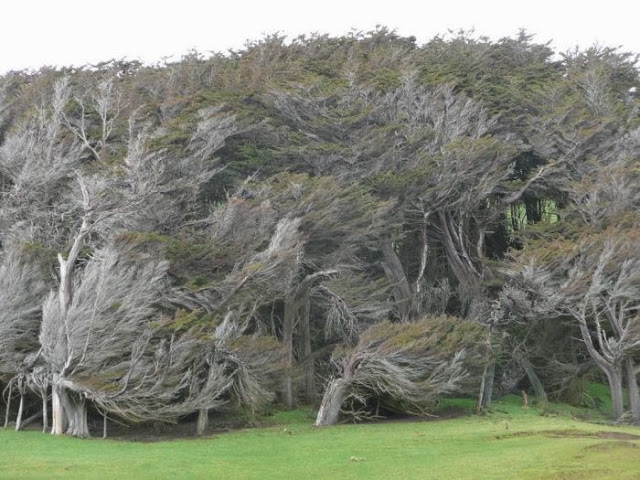 the_twisted_trees_of_slope_point_12_001