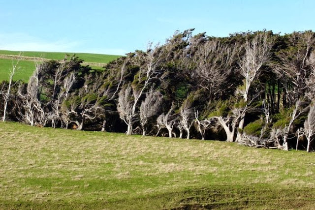 the_twisted_trees_of_slope_point_16_001
