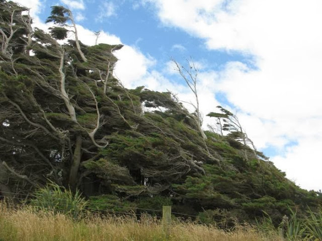 the_twisted_trees_of_slope_point_17